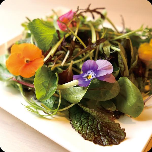 ワークランド茜さんの新鮮野菜サラダ